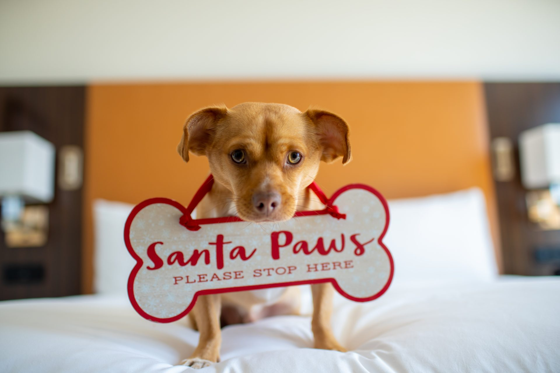 fairmont austin santa paws package